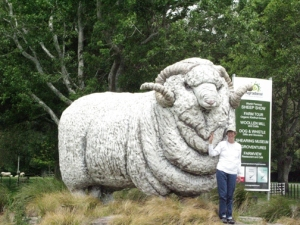 Karen and the merino ram