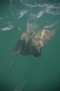 Catching a ray